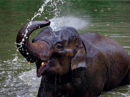 elefanttrekking3